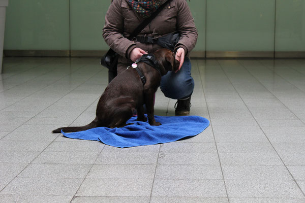 Wildlinge Hundetraining Welpe Lilly Entspannungsdecke Stadttraining