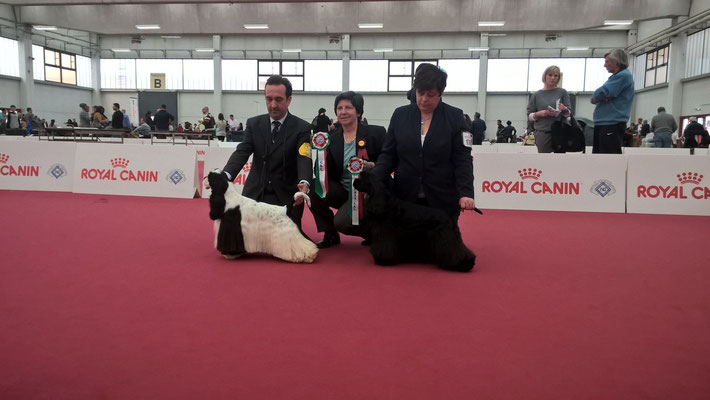 CAC/CACIB Special Blend Take it easy e RCAC/RCACIB Lafanciulladelwesst
