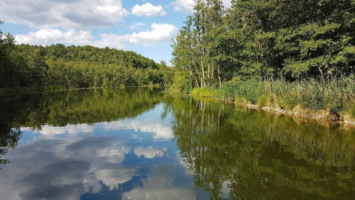 Hausboot mieten in Brandenburg. Traumhafte Natur im Seenland Brandenburg.