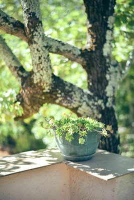 Au coeur d'une foret de chênes...