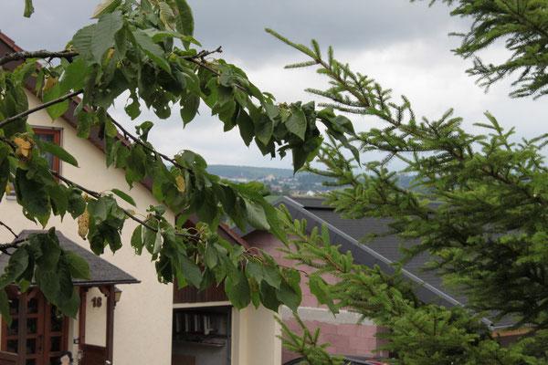 Blick nach Freudenstadt