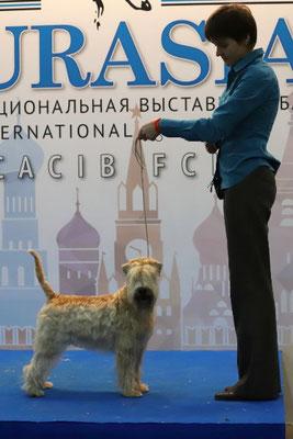 выставка Евразия 2019