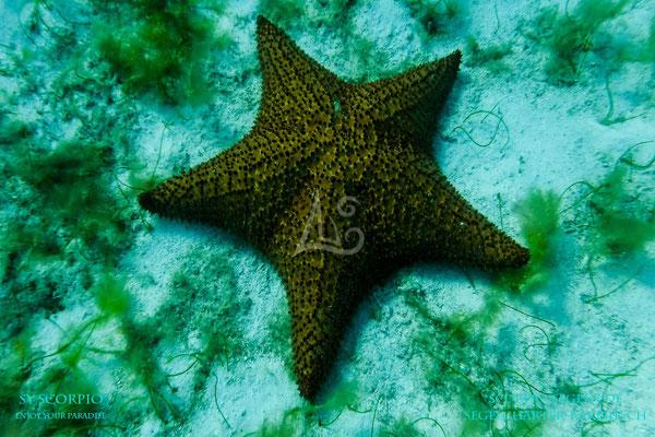 Die Unterwasserwelt