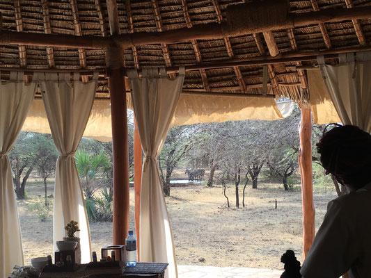 Eine magische Atmosphäre, die Zeltwände geben den Blick in die kenianische Steppe frei, wo eine Herde Zebras gerade die rote Erde des Tsavo aufwirbelt.