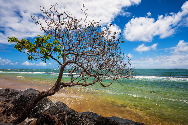 Kauai: Driving the Kuhio Highway