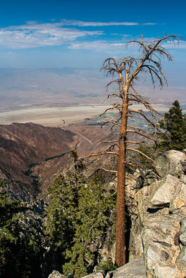 Palm Springs: Going by Aerial Tramway