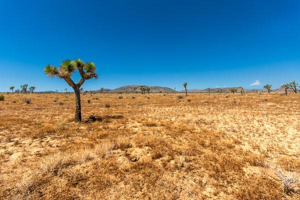Joshua Tree Park: Lost Horse Valley