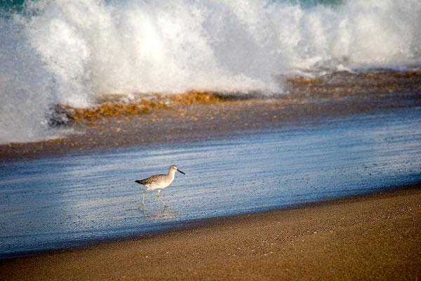 Newport Beach: Early Bird