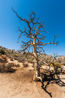 Joshua Tree Park: Hidden Valley Trail