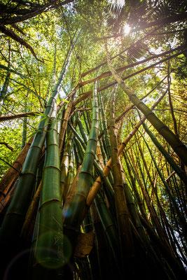 Rivière Des Anguilles: La Vanille Nature Park: Le Bambou