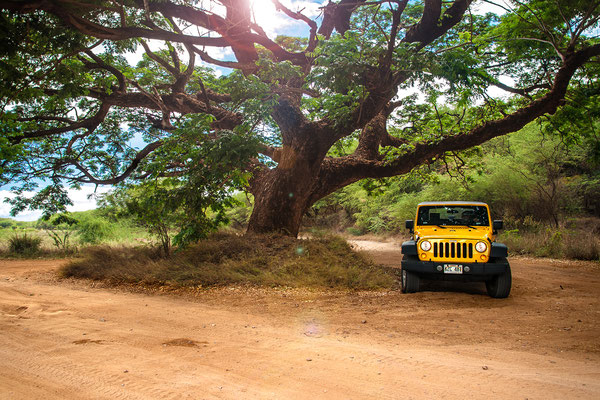 Kauai: Polihale State Park: Parking under the Monkeypod Tree