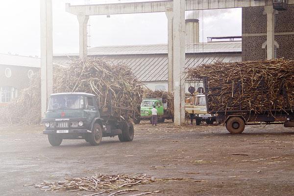Bambous: Medine Sugar Mill