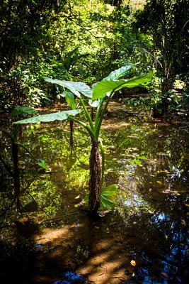 Rivière Des Anguilles: La Vanille Nature Park