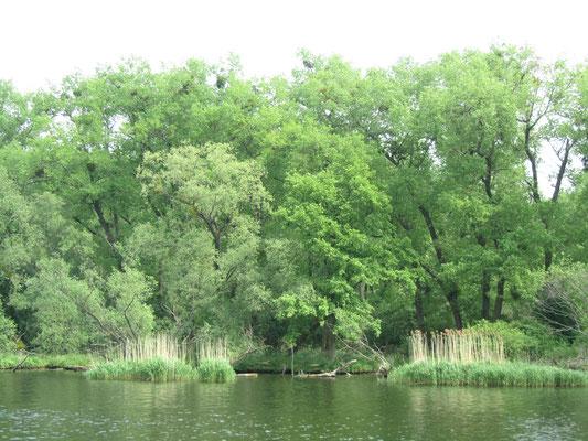 Mit dem Boot auf der Oder