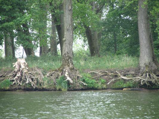 Oder Ufer