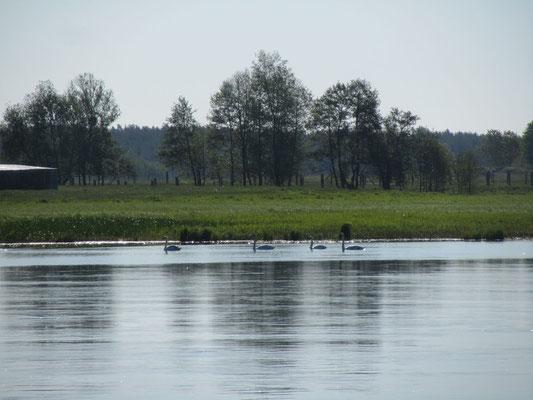 Auf der Oder