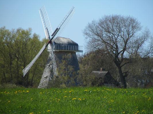 Windmühle Ahrenshoop