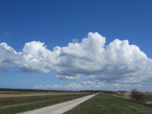 Radweg zwischen Born a. Darß und Ahrenshoop