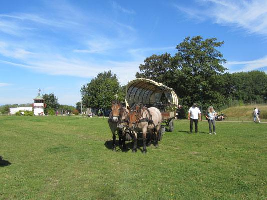 Pferdekutsche am Kap Arcona
