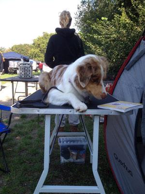 Hund muss ja auf dem Laufenden bleiben! :-)