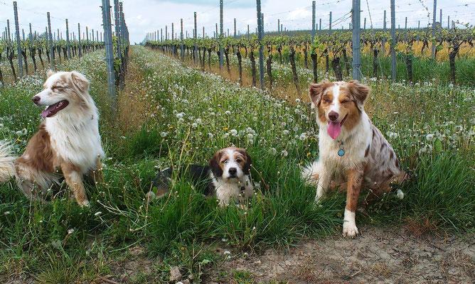 links: Nallah, Tageshund rechts: Holly, Nervensäge