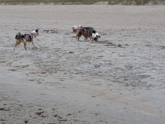 Im Sand schnüffeln macht auch Spaß