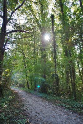 Durch ein Waldstück geht es Richtung Etzenrather Mühle