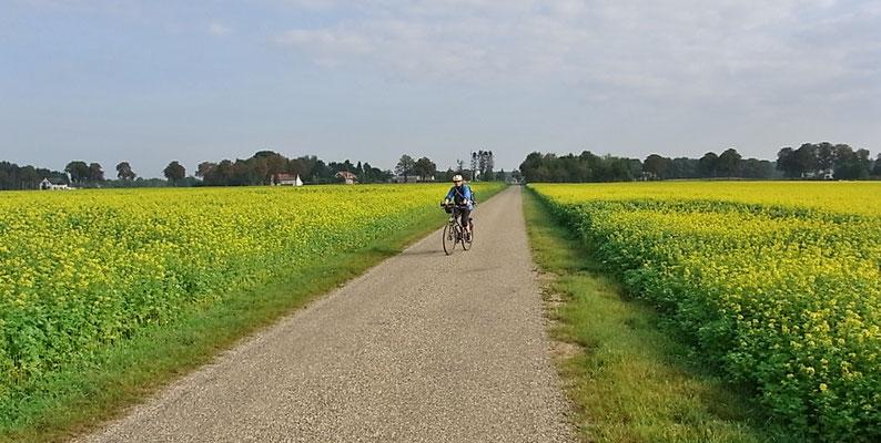 Der Fahrradweg inmitten von Rapsfeldern