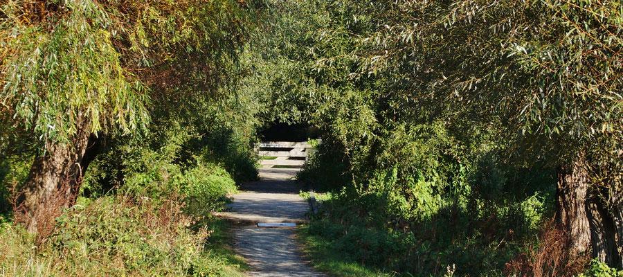 Der Weg ins Rodebachtal