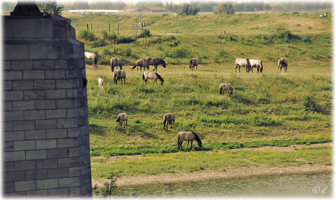Die Wilden Pferde des Naturparks