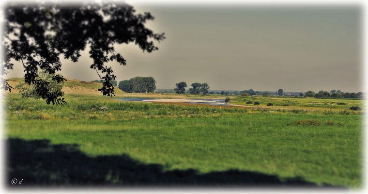 Das alte Flussbett der Maas