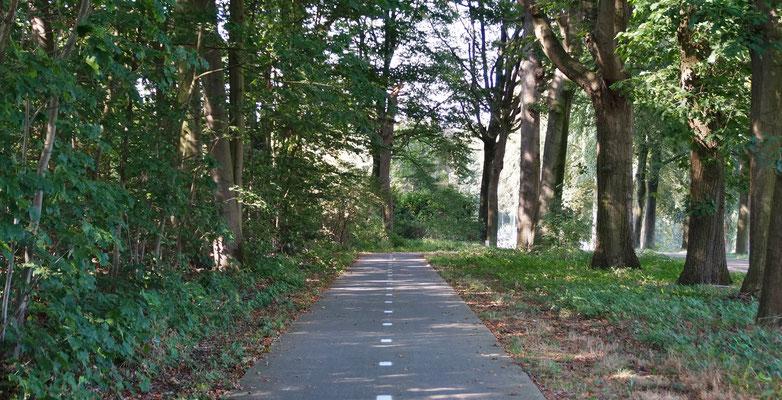 Durch ein bewaldetes Stück geht es Richtung Sint Odilienberg