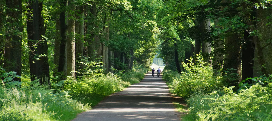 Ein Fahrradweg mitten durch den Wald sorgt für Abkühlung