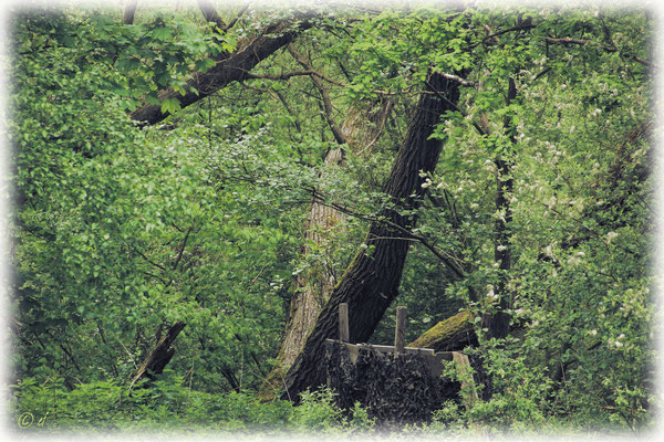 Ein Hochsitz versteckt in dichtem Grün, um die Tiere beobachten zu können