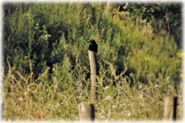 Eine Krähe macht Pause