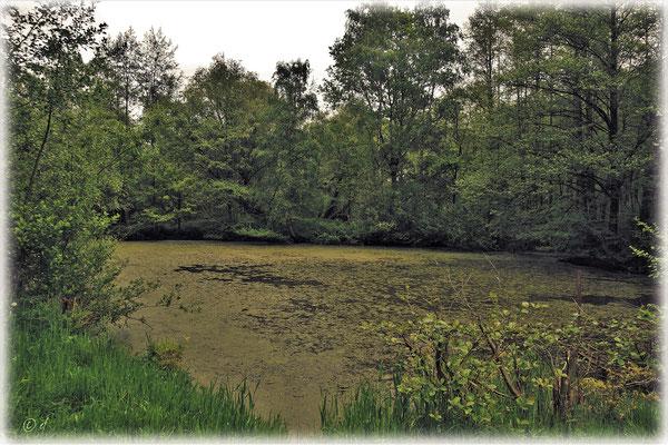 """Ein Teich im """"Tüdderner Fenn"""""""