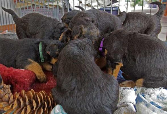 RambaZamba, die Jurataler bei der Schacht um das leckere frische Rindertatar