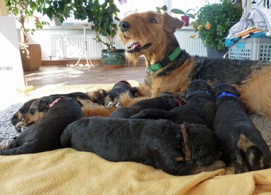 Anica mit ihren Airedalekindern