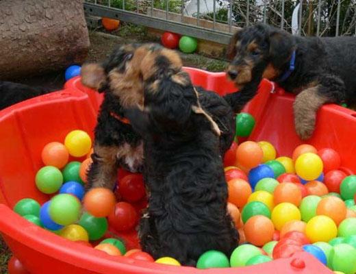Hunde-Action im Bällebad