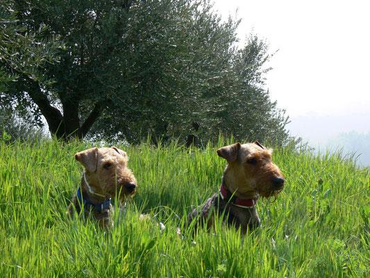 """""""Auch wir brauchen mal Urlaub"""" Rapunzel & Oona im Olivenhain in Italien"""