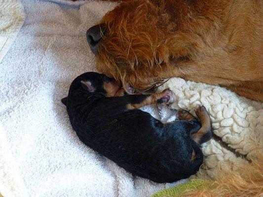 ...der Achte liegt direkt bei seiner Mama und schläft tief und fest