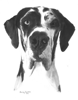 Loena the Great Dane