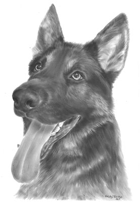 Pablo the German Shepherd