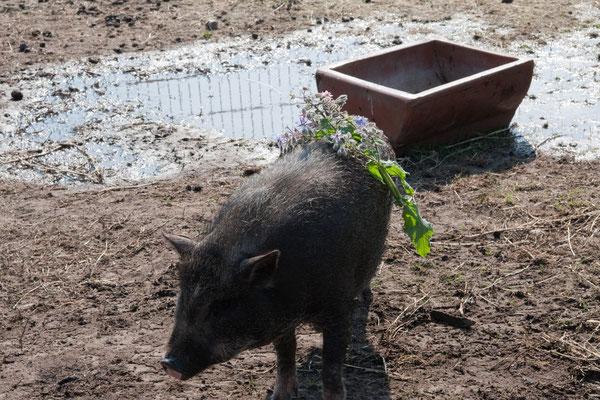 Wir feiern Schweinehochzeit!