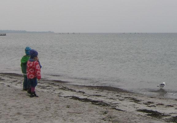 Möwe am Südstrand auf Fehmarn