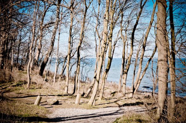 Wald von Katharinenhof im Frühjahr. Foto: Maren Pokroppa