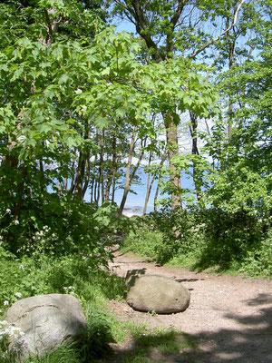 Wald von Katharinenhof im Sommer