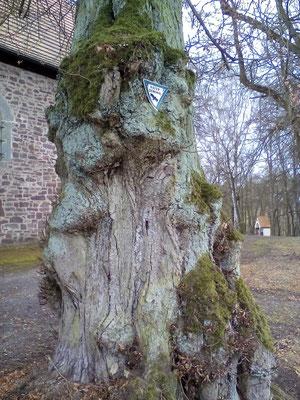 ein Naturdenkmal von vielen dort