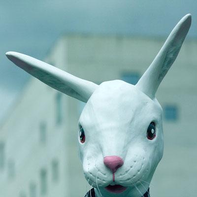 'the rabbit'