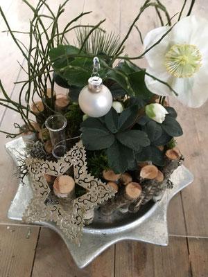 Weihnachtsdekoration Christrose & Stern